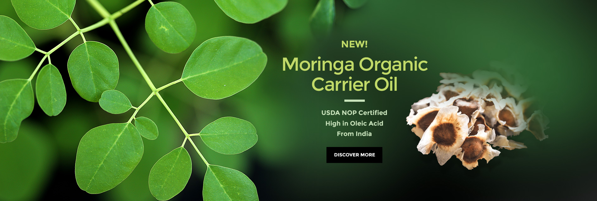 Moringa Organic Carrier Oil